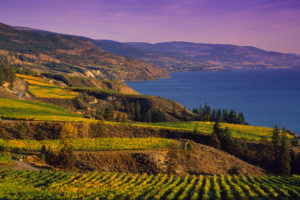 The Okanagan Valley (wine region)