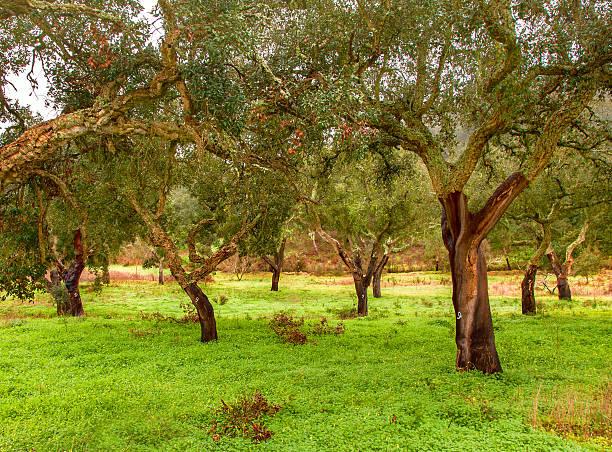 cork-production-trees