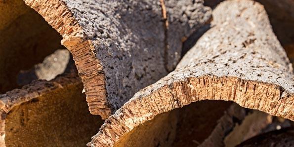 decorative-cork-tree