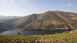 Portugal-vineyard