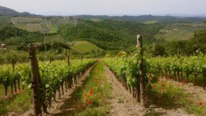 Orange-wine-producers