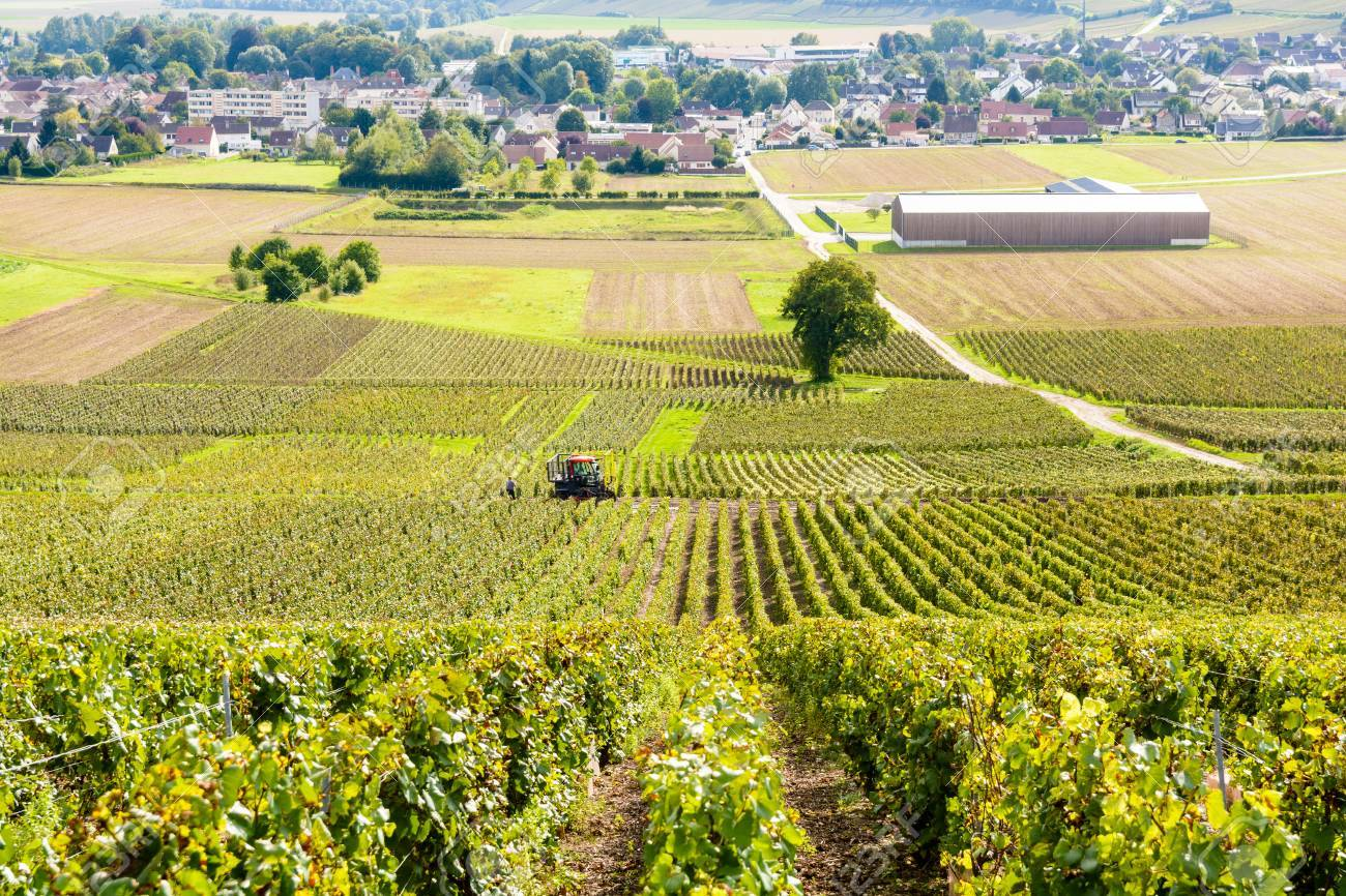 Plots of grapevine in a Champagne vineyard with a winegrower working in the vine with his tractor and a small french village in the background.