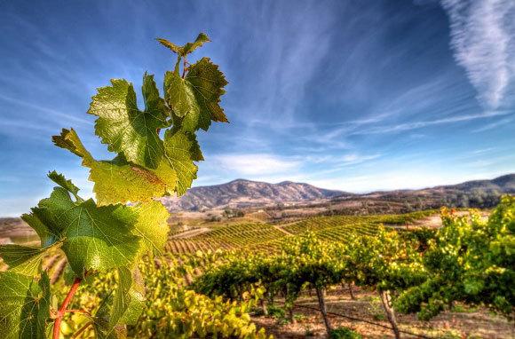 America-Best-Wine-Destinations