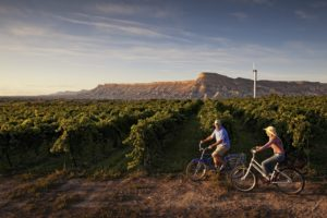 wine and vineyard tour for visit tips